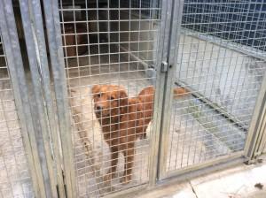 Hund im Tierheim 2