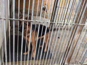 Hund im Tierheim 3