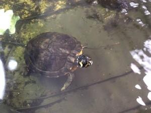 Schildkröte Tierheim 2