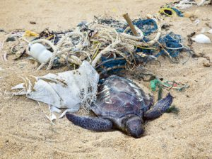 Dead turtle entangled in fishing nets on the ocean