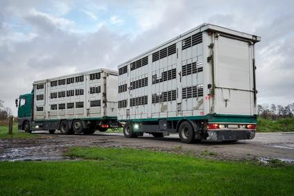 Leerer Viehtransporter auf den Weg zum Hof
